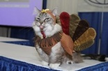 Cat Dressed as Turkey