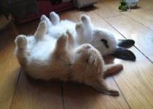 Dead Bunnies