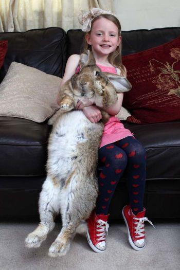 World's Biggest Rabbit 2
