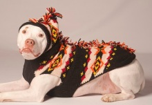 pitbull-in-a-holiday-sweater-1